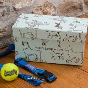 Pet Accessory Box - Dogs Aqua